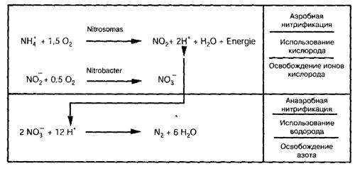 Взаимодействие между анаэробными и аэробными бактериями и воздухом