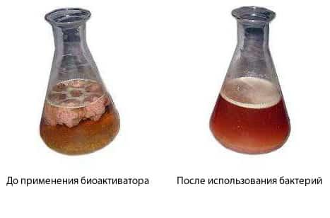 До и после биоактиватора