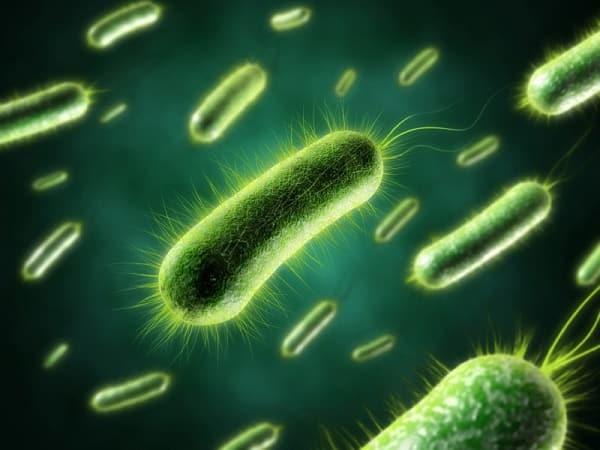 Споры анаэробных микроорганизмов
